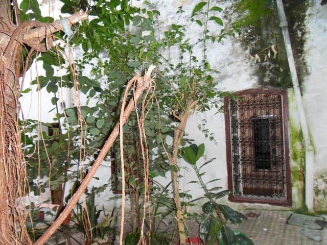 le patio-jardin de riad